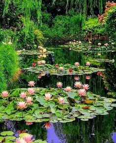 Monet Garden Giverny, Water Lilies Painting, Lotus Pond, Lily Pond, Beautiful Nature Wallpaper, Nature Pictures, Land Scape, Garden Inspiration, Garden Tools