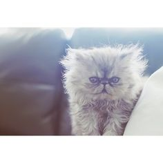 Meet Ollie:   Ollie Is The Coolest Persian Cat You Can Follow On Instagram