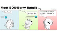 Meet BOO Berry Bandit: BBB with a ball