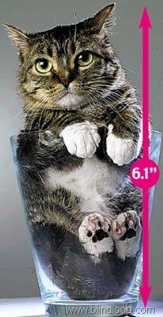 world record some world record holders no biggie 17 photos guinness world crazy world pinterest record holder - Smallest Cat In The World Guinness 2017