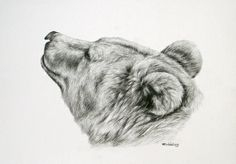 bear head drawing | Brown bear