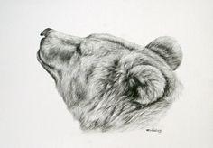 bear head drawing | Brown bear