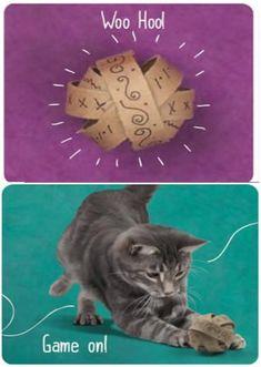 Top 10 Fun DIY Cat Toys