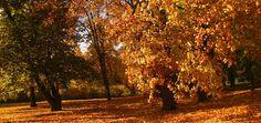 Rustig herfstweer opnieuw aan zet