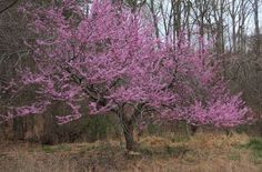 Eastern Kansas in the spring is a beautiful sight. The Redbud trees were in full bloom, and the leaves were popping on the other trees.