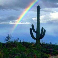 With the rain comes a rainbow in Tucson, Arizona. (Photo via Instagram by @nessahetz)