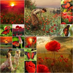 '' Poppies & Butterflies '' by Reyhan Seran Dursun