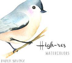 Watercolor Birds Clipart  Winter Birds Clipart  Woodland