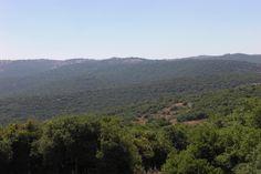 Ajloun Forest Reserve (Jordan)