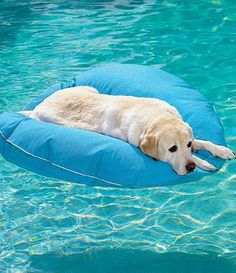With our Dog Pool Float and Lounger, Fido can float in style -- or stay cool as he lounges on deck.