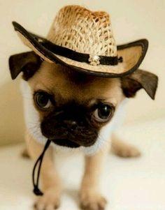 Aww too cute !