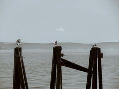 Set of seagulls, minding their own.