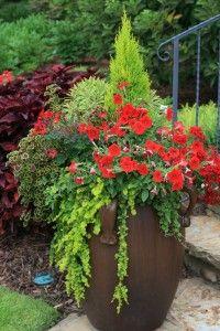 Coleus Burgundy Wedding Train, Creeping Jenny, Red Geranium the-joy-of-plants Container Flowers, Container Plants, Container Gardening, Succulent Containers, Outdoor Planters, Garden Planters, Outdoor Gardens, Beautiful Flowers Garden, Beautiful Gardens