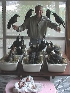 "Holy Moly!!! Not sure what's going on here but it looks like I could name this guy ""The Corvidae Dad""!!!!   :)"