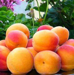 Zaragoza Frutas de #Aragón  Tiernas, sabrosas, sanas. Te apetecen?