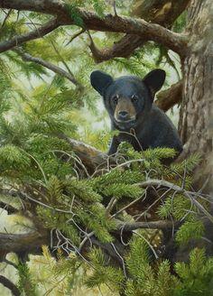 Baby black bear painting by Bob Travers