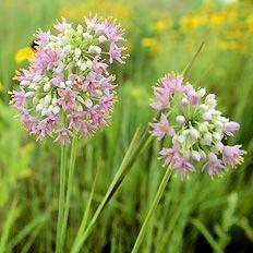 Prairie Restorations Inc - Restoring Natural Habitats - Maintaining Native Landscapes