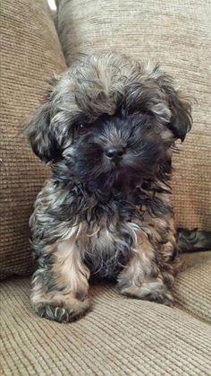 Bolonka Treasures Puppy Page