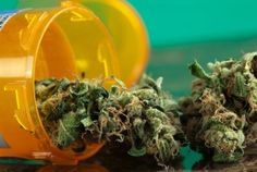 MARIJUANA CONSUMPTION MAY COMBAT DIABETES. New research published in the recent issue of the AMERICAN JOURNAL OF MEDICINE has found that the body of those who consume marijuana may be better at controlling blood sugar, making it a potential combatant against diabetes. According to the study, marijuana users had significantly lower levels of the hormone insulin--indicating better blood sugar control.
