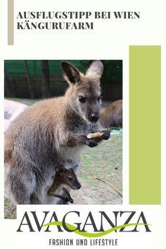 Heute verrate ich euch einen Geheimtipp für euren nächsten Familienausflug <3! Nur ca. 1 Stunde von Wien entfernt gibt es eine Kängurufarm wo ihr diese wunderbaren Tiere hautnah erleben könnt! Kangaroo, Blog, Animals, Holiday Beach, Traveling With Children, Animales, Baby Bjorn, Animaux, Blogging