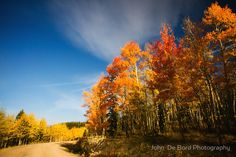 """""""Road Of Many Colors"""" - Photographed along Boreas Pass, Colorado at the height of Autumn"""
