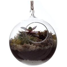 Hanging Terrarium (31 AUD) ❤ liked on Polyvore featuring home, home decor, floral decor, glass globe, glass home decor, succulent terrarium, glass terrarium and succulent glass terrarium