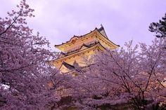 Pagodes Japon Printemps Sakura Villes