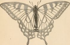 """Image from page 44 of """"The butterfly hunters"""" (1868) 