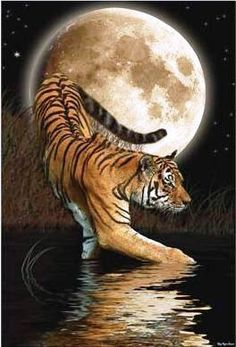 tiger in the moonlight