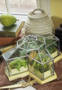 """Terrarium Gardens-    This is like the one I gave as a gift for Christmas... apparently, it is a """"conservatory"""" terrarium."""