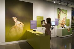 Nature, Camera, Action! National Media Museum Bradford, 2014.