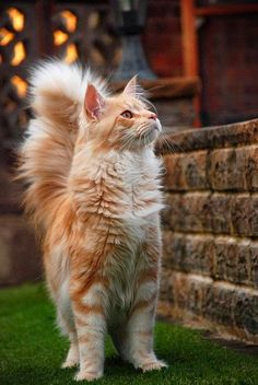 I Love Animals: Pretty kitty