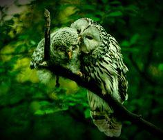Owl & Baby Owl