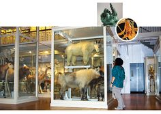 Harvard Museum of Natural history is a great place to shoot.  Really hard to get it right but well worth it and my client loved the photos.