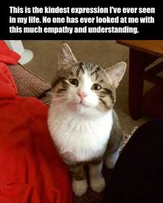 20 Fresh Animal Memes That Will Fill You With Joy In The Next Few Minutes - I Can Has Cheezburger? 20 Fresh Animal Memes That Will Fill You With Joy In The Next Few Minutes - World's largest collection of cat memes and other animals Funny Animal Memes, Cute Funny Animals, Cute Baby Animals, Cat Memes, Funny Cute, Animals And Pets, Cute Cats, Funny Memes, Wild Animals