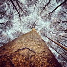 With my GoPro in the Forest. Kiel, Germany.