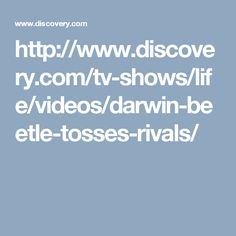 http://www.discovery.com/tv-shows/life/videos/darwin-beetle-tosses-rivals/