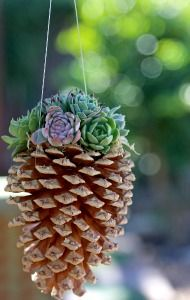 Pine Cone Crafts......hen and chicks planter!