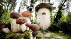 What creativity. To make such an unpleasant side of summer houses. Once I get one of my own I know what the outhouse will look like-  Outdoor toilet for Summer House