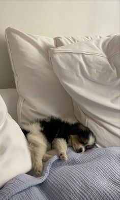 Cute Puppies, Cute Dogs, Dogs And Puppies, Doggies, Cute Little Animals, Cute Creatures, Animals And Pets, Baby Animals Pictures, Fur Babies