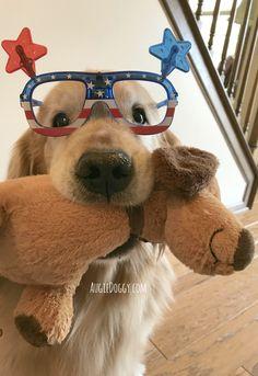 Happy Animals, Animals And Pets, Cute Animals, Big Dog Little Dog, Dogs Golden Retriever, Golden Retrievers, Mundo Animal, Cockapoo, Cute Animal Pictures