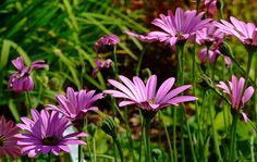 Flowers at Breezy Knees Gardens, York
