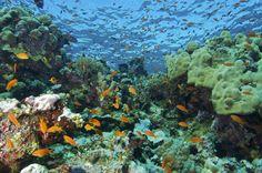 Magical World!! Koh Phi Phi by Roger Johnson for Visa Diving Center