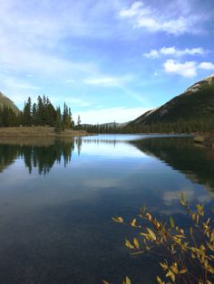 Forget Me Not Pond - Kananaskis Country