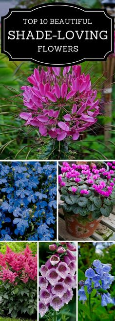 When it comes to flowers and gardening, the choice you have is big. You can choose between many types of flowers, all beautiful in their own way. They all require different conditions in order to grow…MoreMore  #gardeningideas