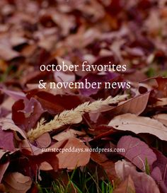 Day 31: October Favorites and November News // 31 Stories of Loving God as an Introvert | Sun Steeped Days