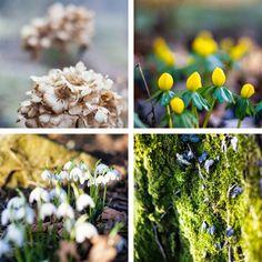 Marianne's Have: På jagt efter nye herligheder