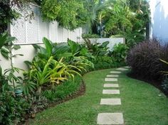 crinums, heliconias, gingers, correopsis border, roheo border