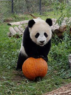 The Toronto Zoo (@TheTorontoZoo) | Твиттер