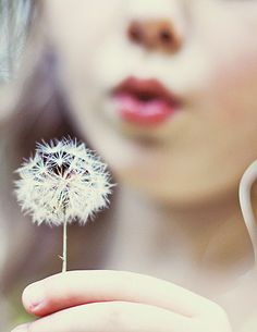 Wish upon a dandelion Make A Wish, How To Make, Dandelion Wish, Dandelion Seeds, Wish Come True, Bohol, Simple Pleasures, Dandy, Muse
